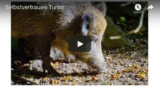 Wildschwein-Selbstvertrauen-Turbo